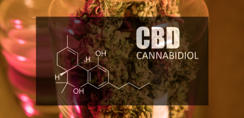 weedistry-Survey-Nearly-Half-Of-People-Who-Use-Cannabidiol-Products-Stop-Taking-Traditional-Medicines